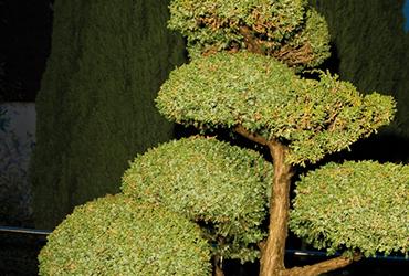 angebot-unterhalt-pflanzenschutz