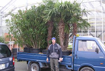 angebot-unterhalt-pflanzenvermietung